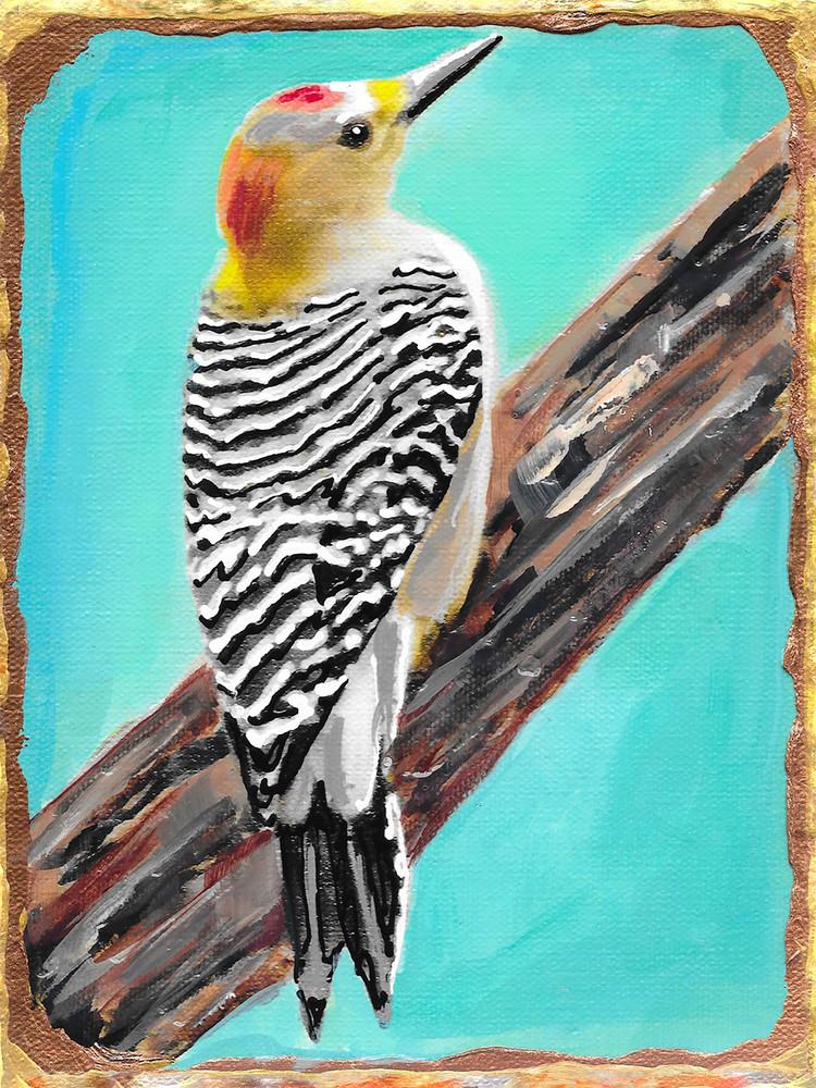 Golden Fronted Woodpecker Art   Channe Felton Fine Art