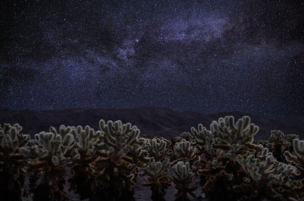 Cholla Nightfall Photography Art | Josh Kimball Photography