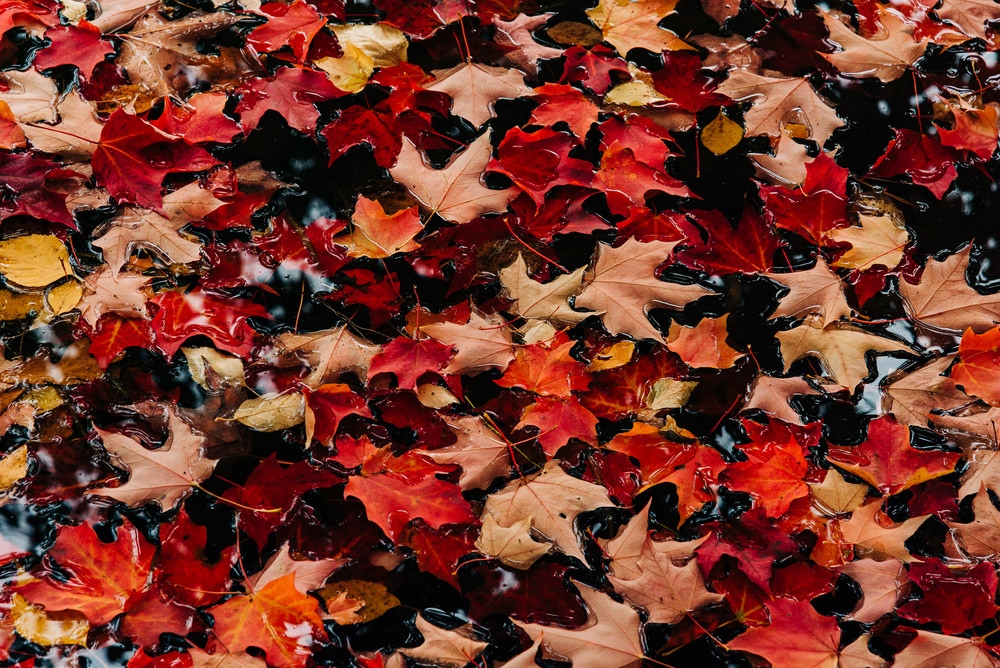 Colors - Autumn Leaves II, photography by Jeremy Simonson.