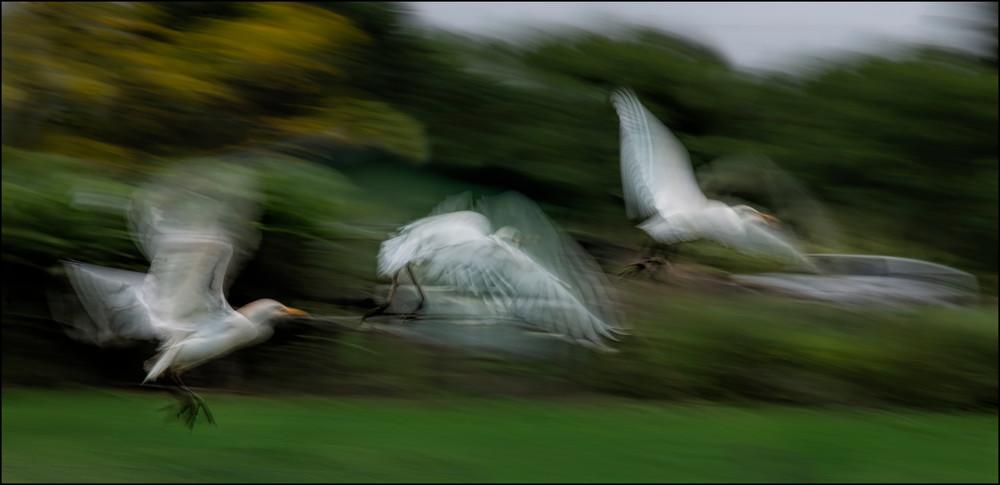 Dancers On Air Photography Art | Ed Sancious - Stillness In Change