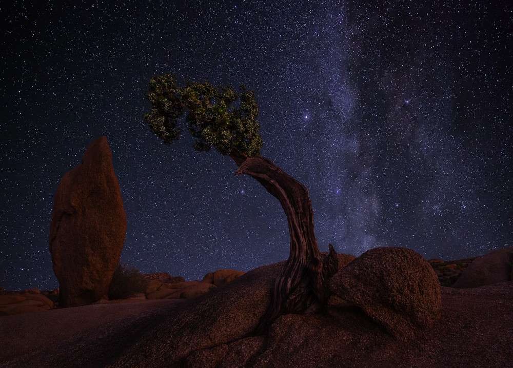Juniper Monument Photography Art | Josh Kimball Photography