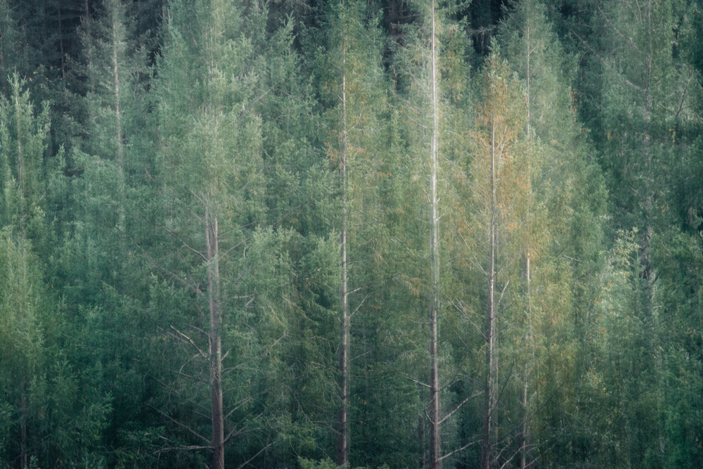 La Foret - Fall forest with intentional movement photograph print