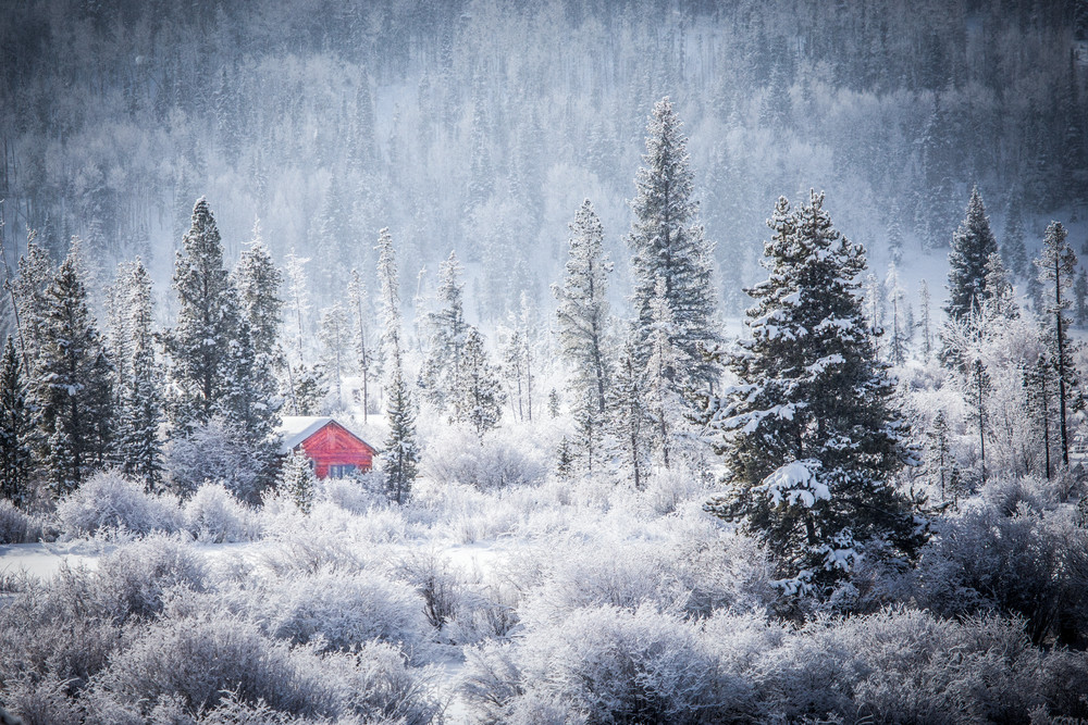 Frosted Morning  Photography Art   Colorado Born Images