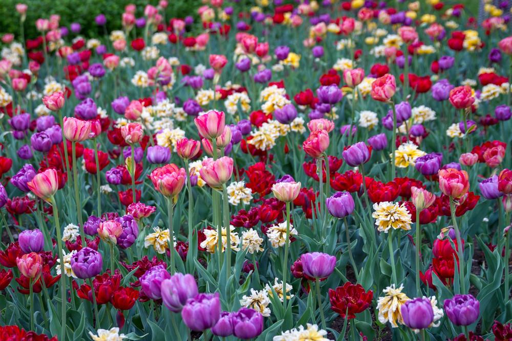 Rainbow Garden Photography Art | Julie Williams Fine Art Photography