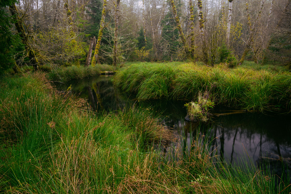 Autumn, South Nemah River, Washington, 2020