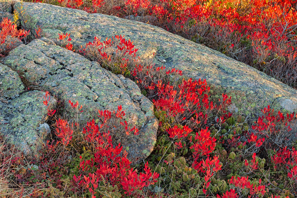 Blueberry Barrens, Acadia NP