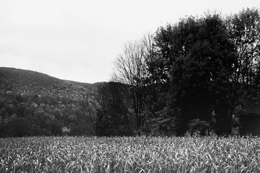 Corn Photography Art | LenaDi Photography LLC
