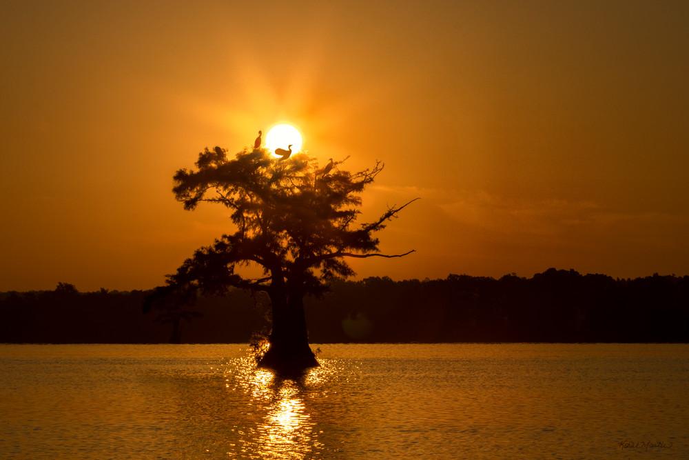 Sunsize Cormorant Tree  Tm  8534 Rlt20 Art | Koral Martin Fine Art Photography