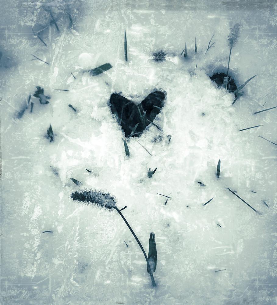 Snow, foxtails, heart, monochrome, photograph, lost-valentine
