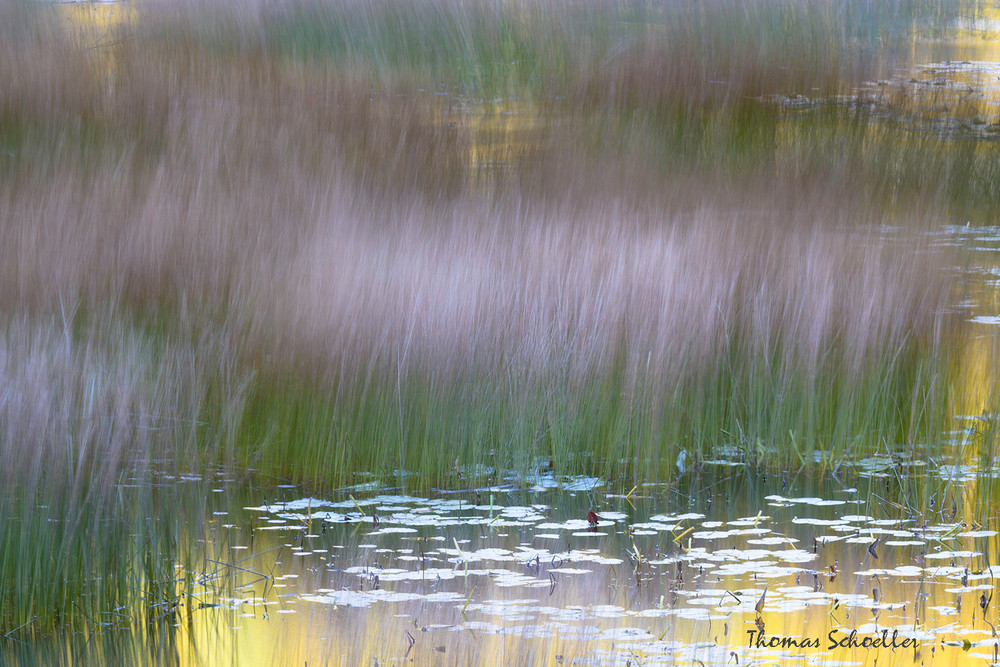Abstract Fine Art Nature Photography - Pond Reeds swaying the breeze   Prints for sale