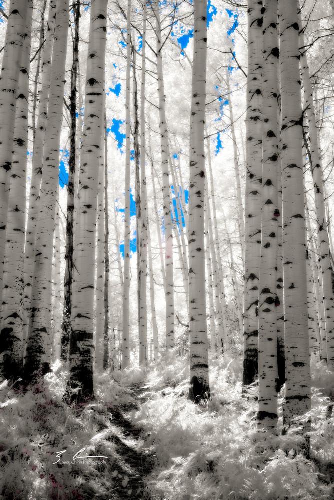 Spirit Of The Forest Photography Art | Casey Chinn Photography LLC
