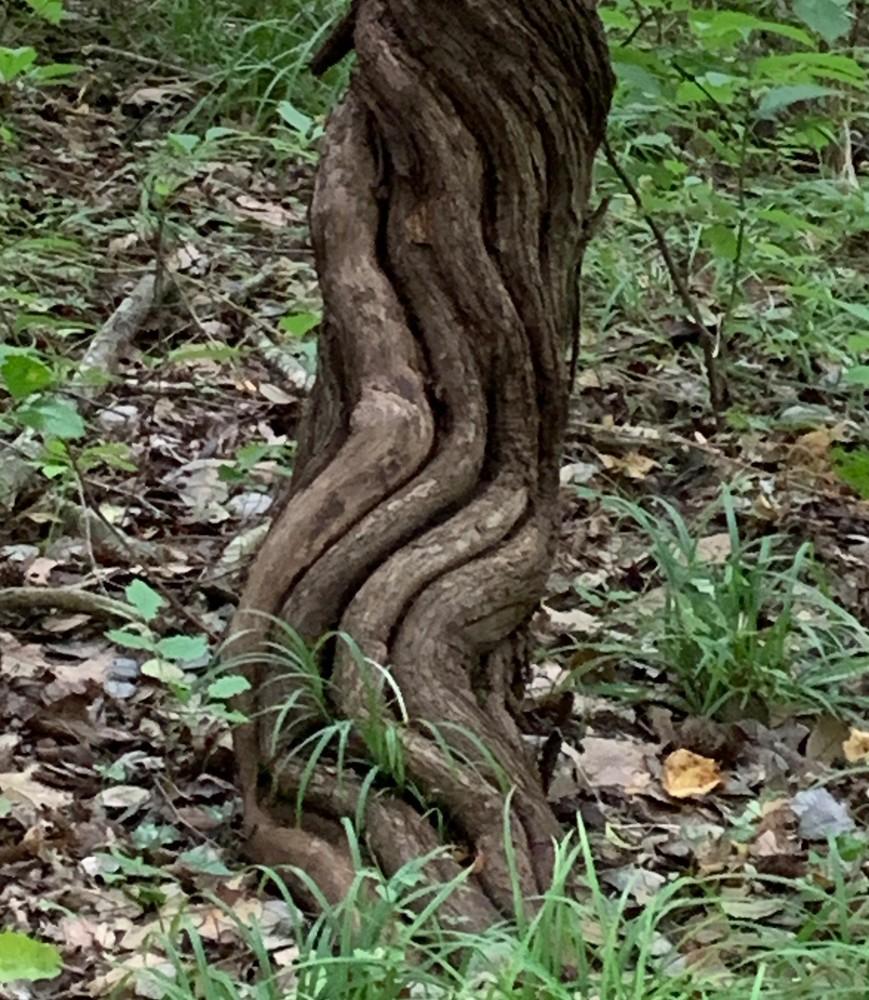 Landsford Canal Tree Art   Nisha Strain