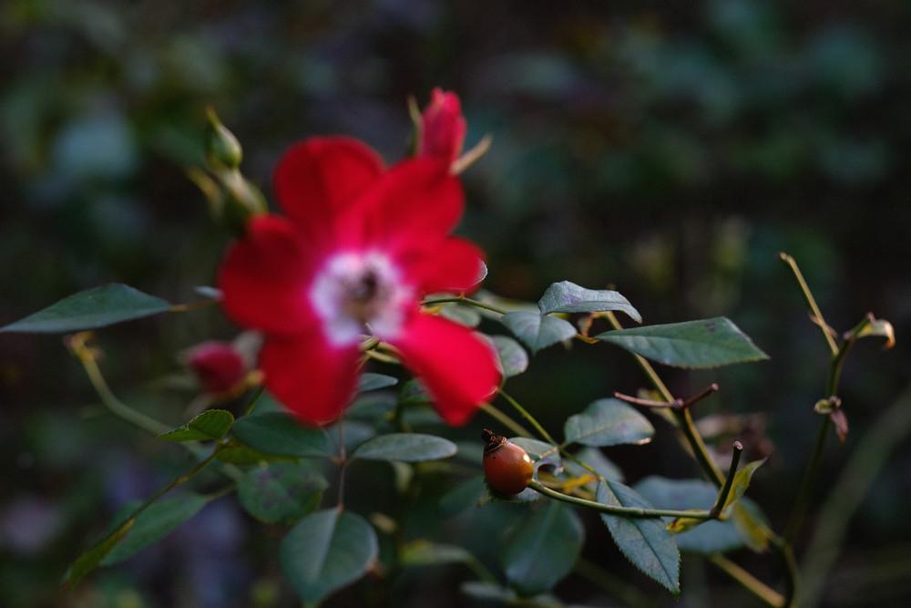 Chief Running Flower Photography Art | LenaDi Photography LLC