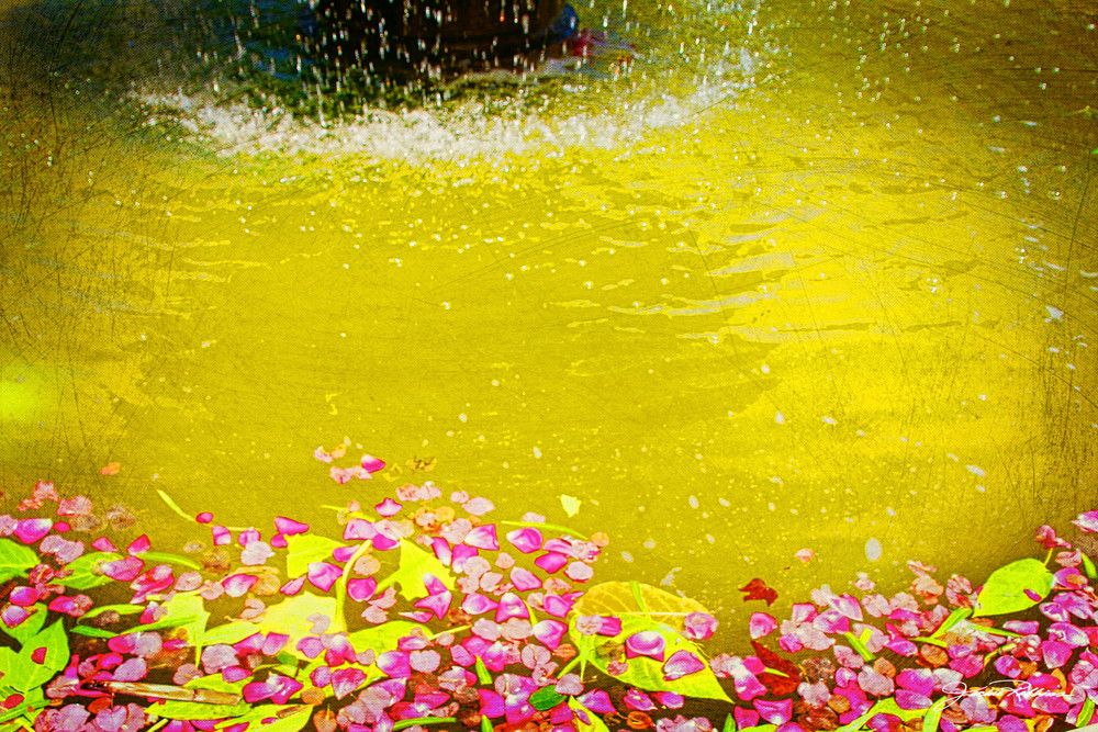 petals, flowers, yellow, fountains, abstract, pieces, parts, jackierobbinsstudio, photographicprints
