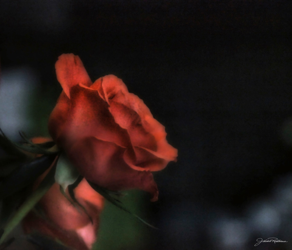 dark, precipice, happen, questions, timeframe, unknown, burdensome, breakthrough, rose, love, rebirth, jackierobbinsstudio, photographicprints, buyartonline