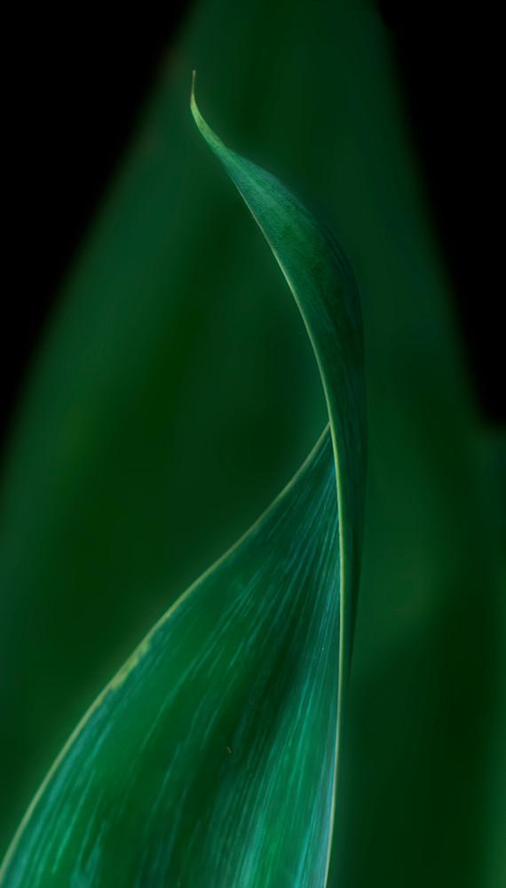 Green Curving Photography Art | Ed Sancious - Stillness In Change