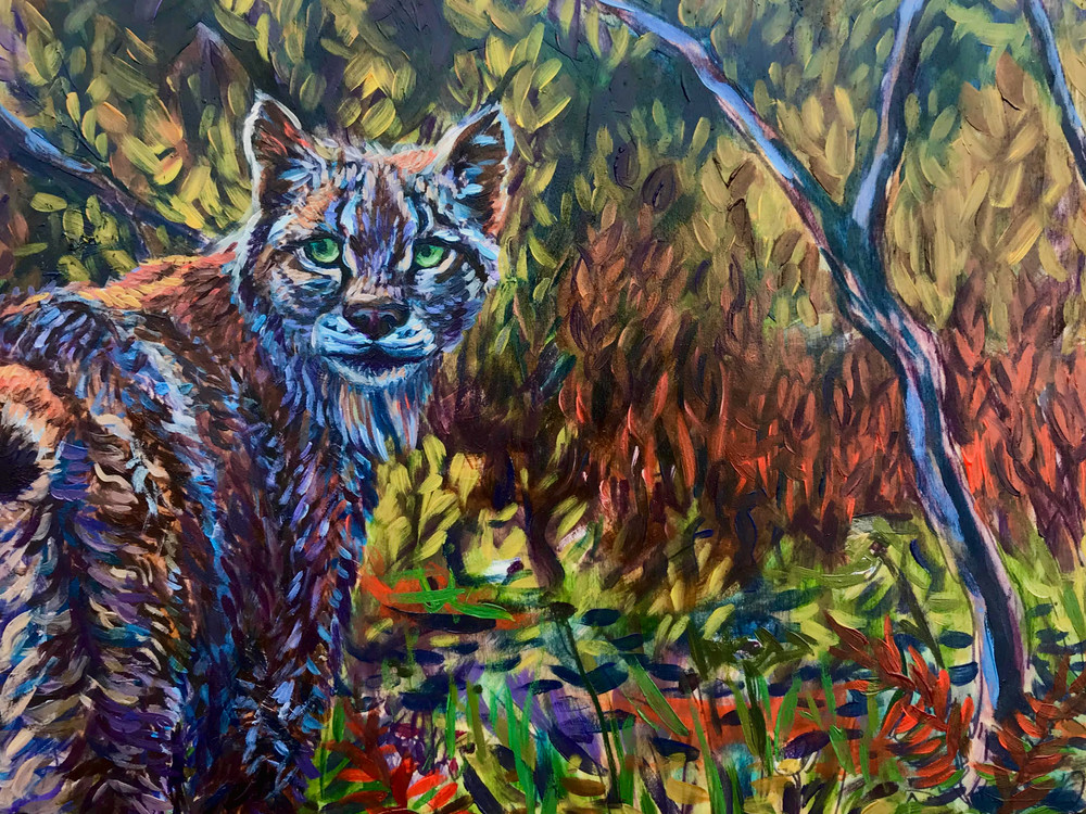 Lynx in fall forest of Denali by Amanda Faith Thompson wildlife art