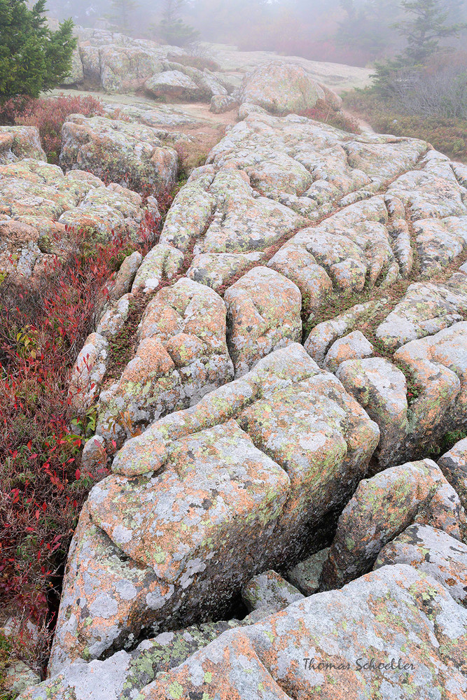Abstract Fine Art Nature Photography | Acadia National Park prints for sale