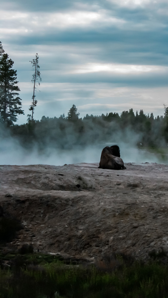 Bison In The Mists   Tall Photography Art | Happy Hogtor Photography