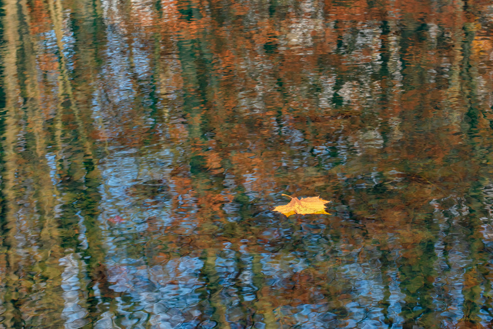 Reflecting On Fall     3684 Art | Koral Martin Fine Art Photography