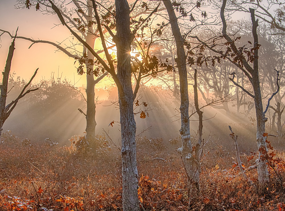 Long Point Fall Morning Fog Sun Beams Art | Michael Blanchard Inspirational Photography - Crossroads Gallery