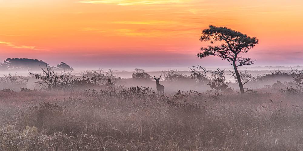 Long Point Buck Fall Sunrise Copy Art | Michael Blanchard Inspirational Photography - Crossroads Gallery