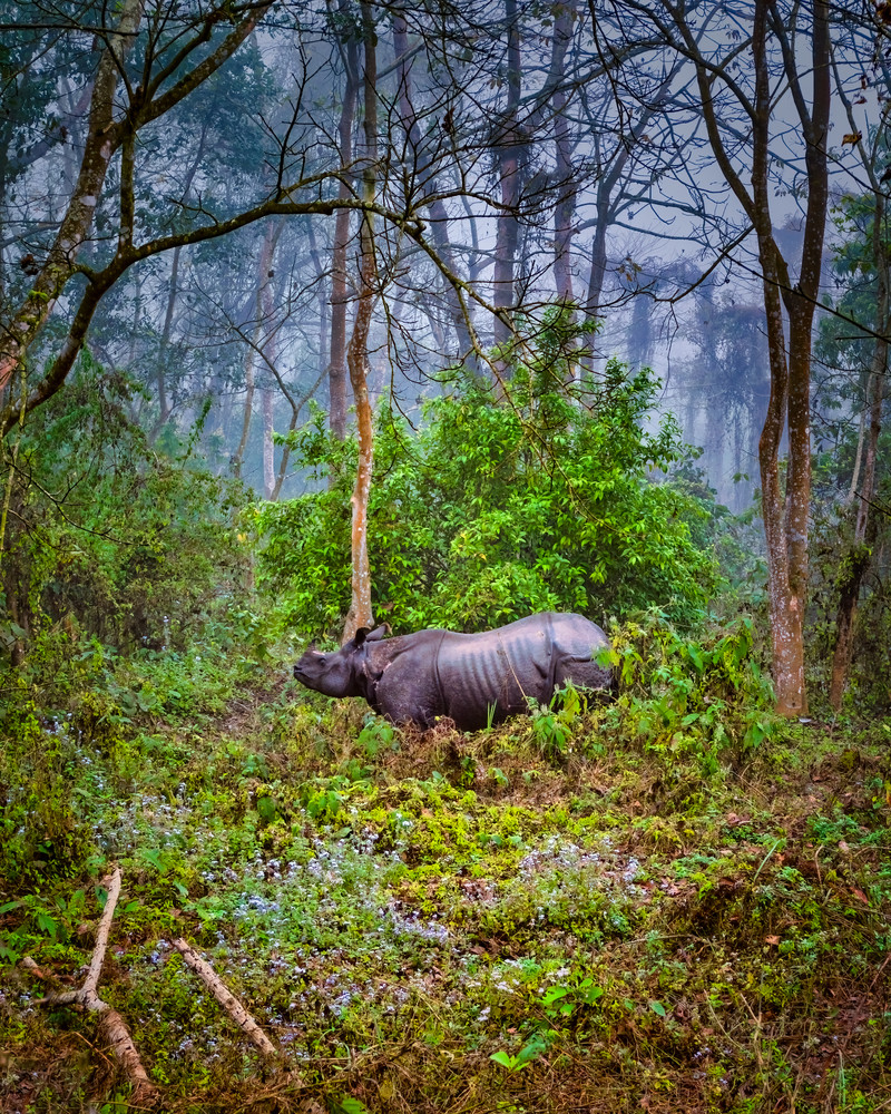 Mama Rhino of the Chitwan