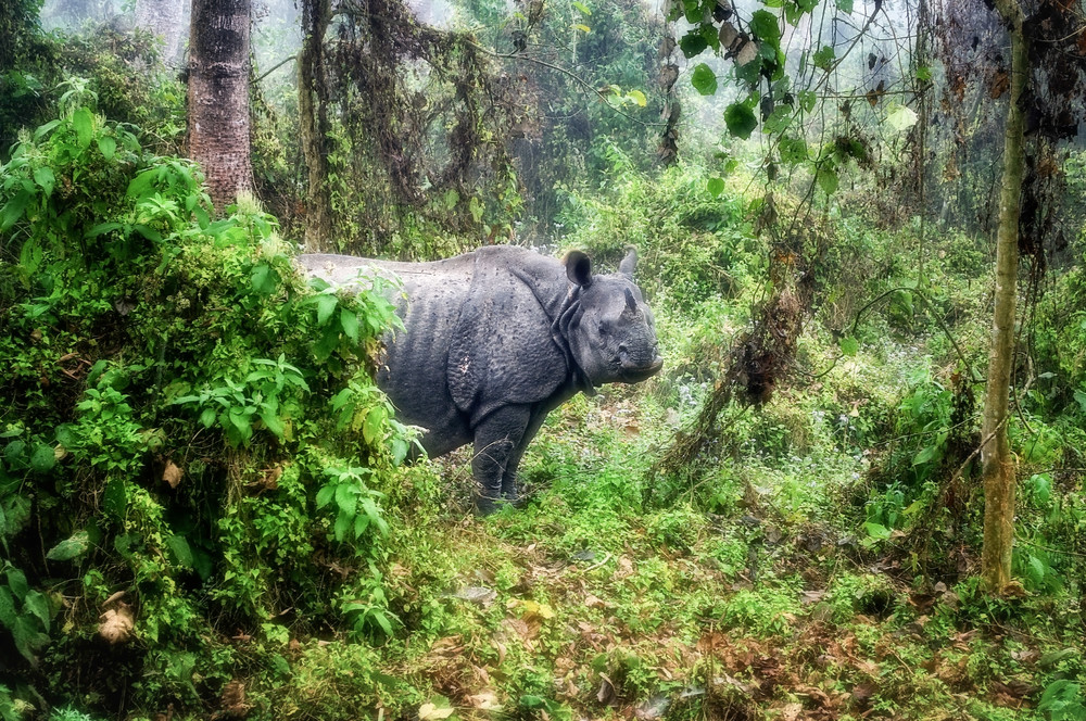 Mama Rhino Protecting Her Young Photography Art   Grace Fine Art Photography by Beth Sheridan