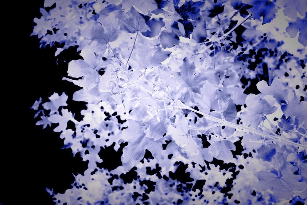 Blue Leaves Art   onlythemoon