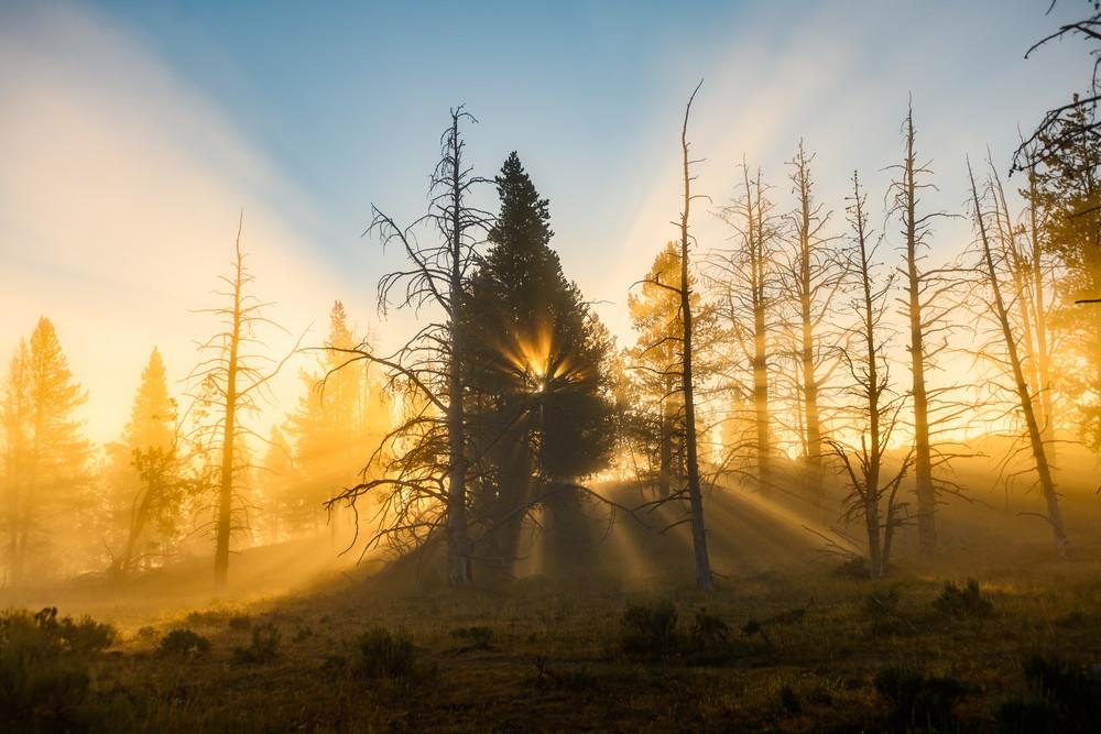 Tree Heart  Yellowstone Photography Art   Casey McFarland Photography