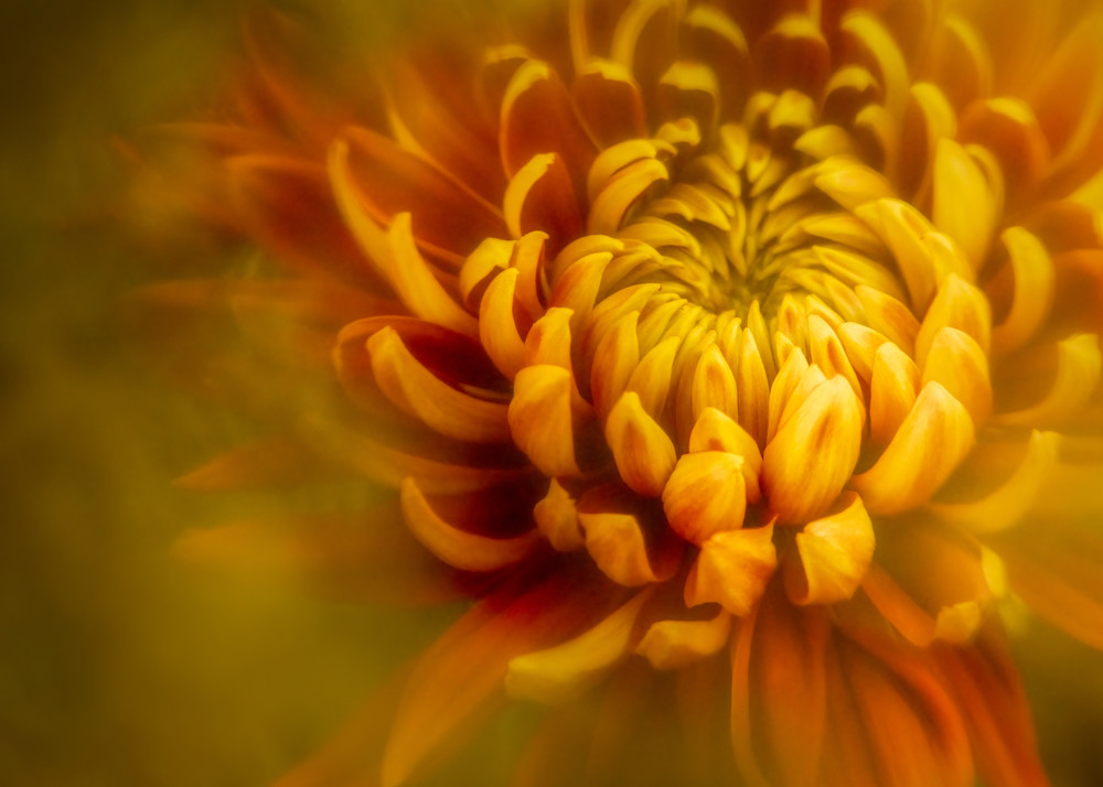 Red And Yellow 1 Photography Art | Grace Fine Art Photography by Beth Sheridan