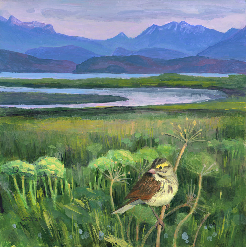 Savannah Sparrow Art   Studio Girard