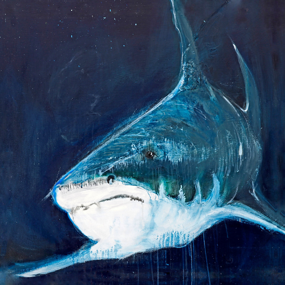 Shark Art | Galleri87