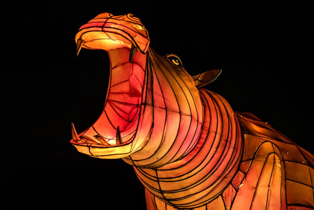 Rhino lantern sculpture photograph