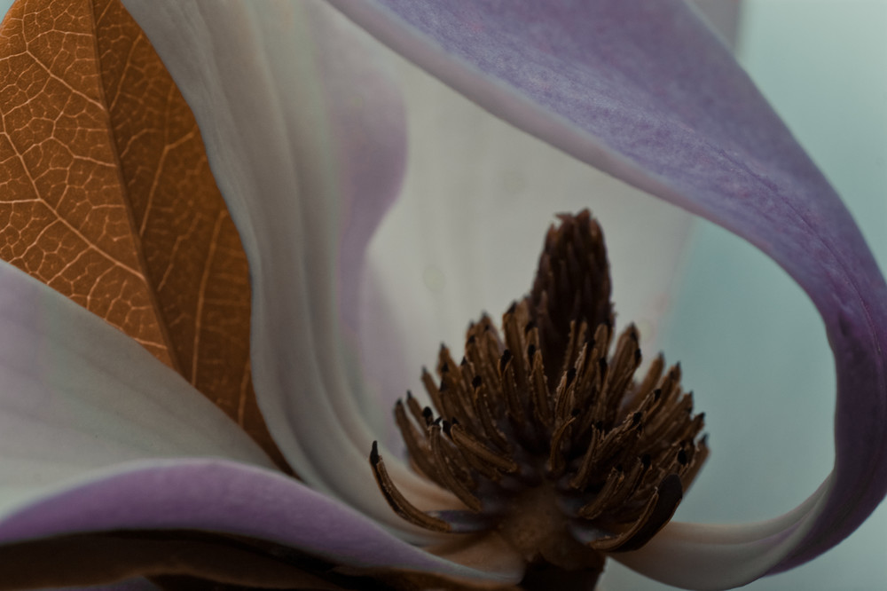 Magnolia Dream No. 2 Art | Anna Jaap Studio