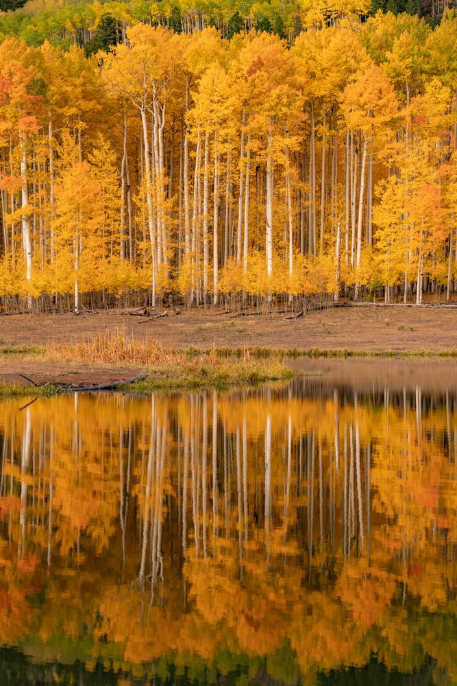Aspen Reflection Photography Art | Alex Nueschaefer Photography