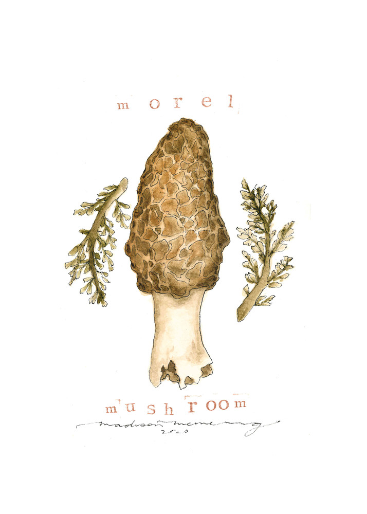Morel Mushroom  Art | Cool Art House - online art gallery with hip emerging artists. Collect cool art you can view on your own wall before you invest!