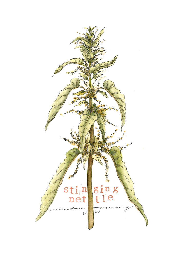 Stinging Nettle  Art | Cool Art House - online art gallery with hip emerging artists. Collect cool art you can view on your own wall before you invest!