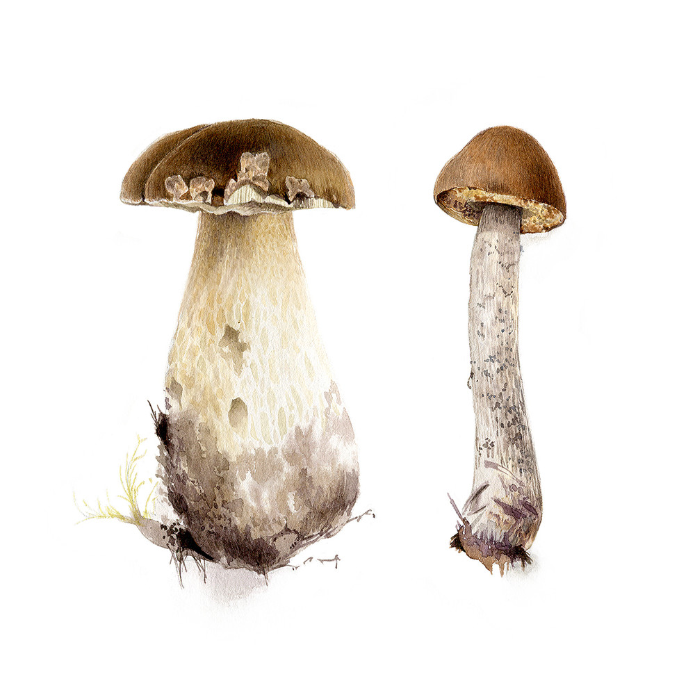 Two Boletes Art | Cool Art House - online art gallery with hip emerging artists. Collect cool art you can view on your own wall before you invest!