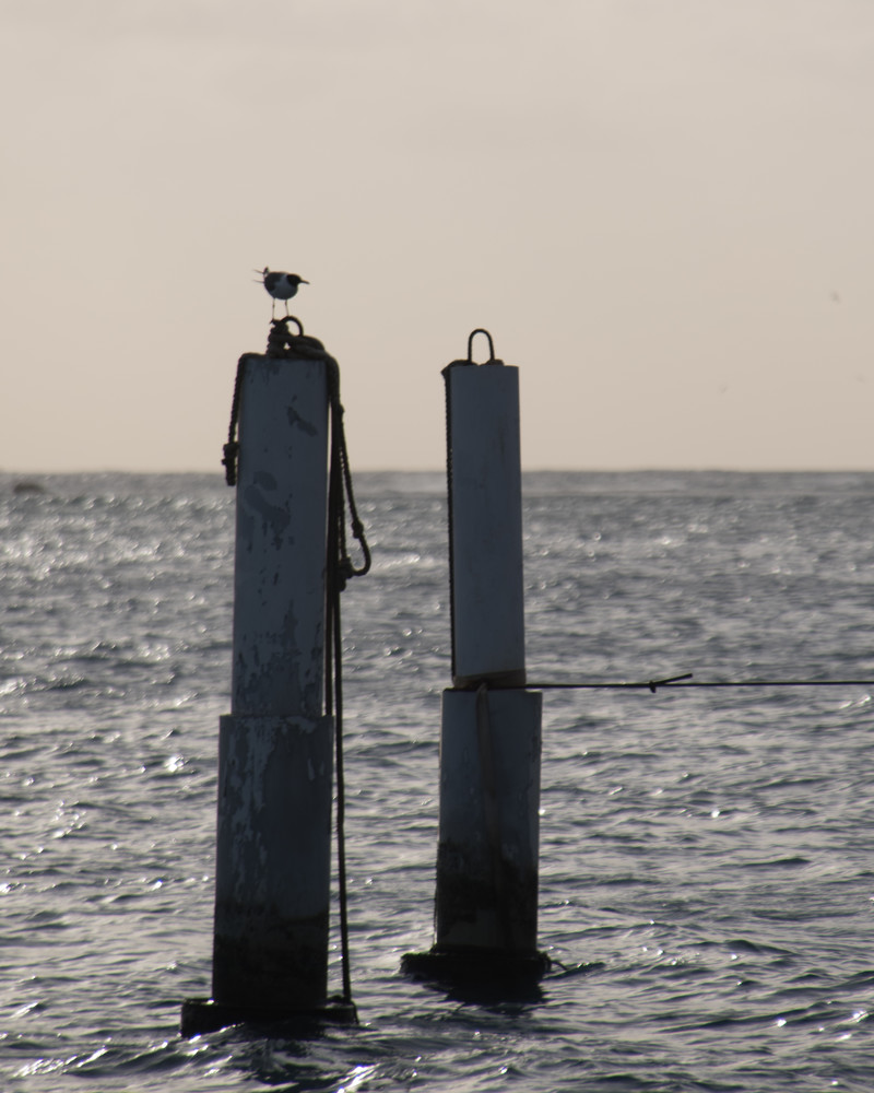At Sea..Gull 2 Art   Thriving Creatively Productions