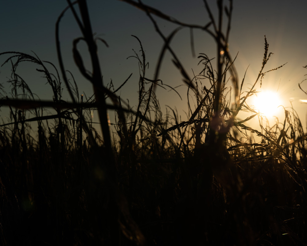Fields Of Sunsets Art   Thriving Creatively Productions