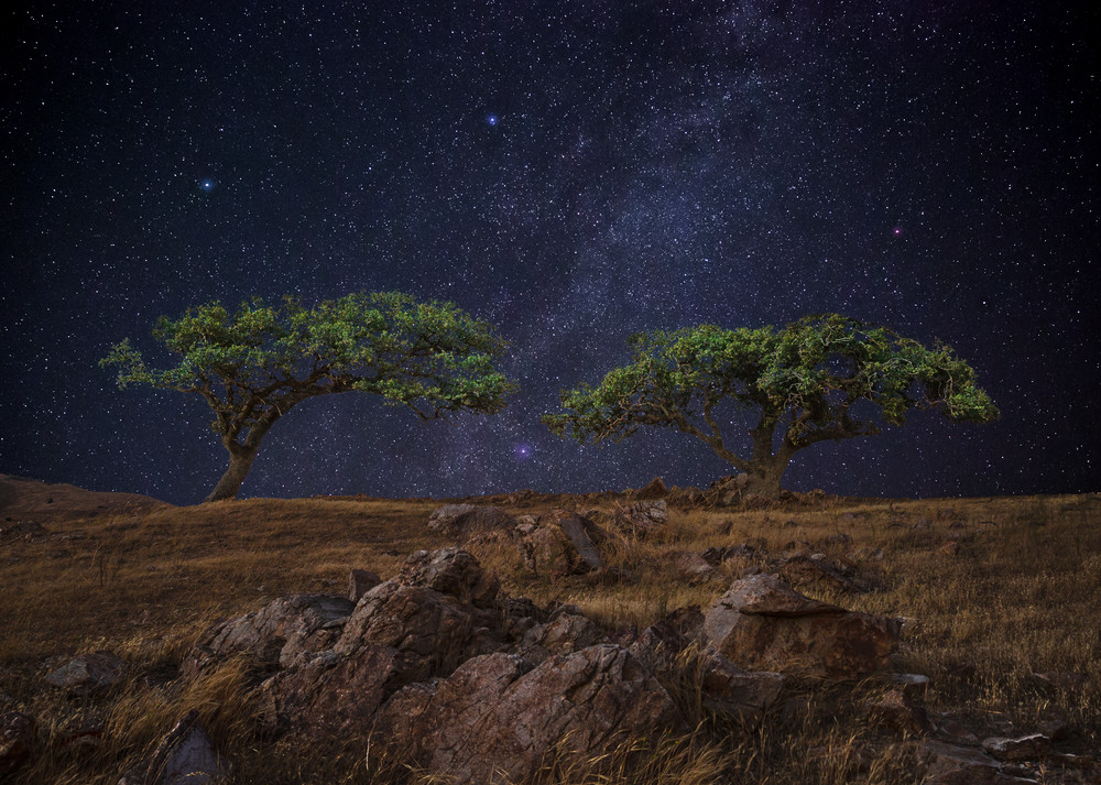 Twin Starry Oaks Photography Art | Josh Kimball Photography