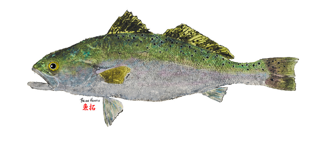 Spreckled Trout