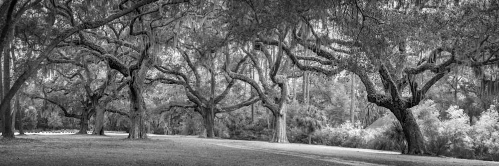 Six Oaks in Sea Pines