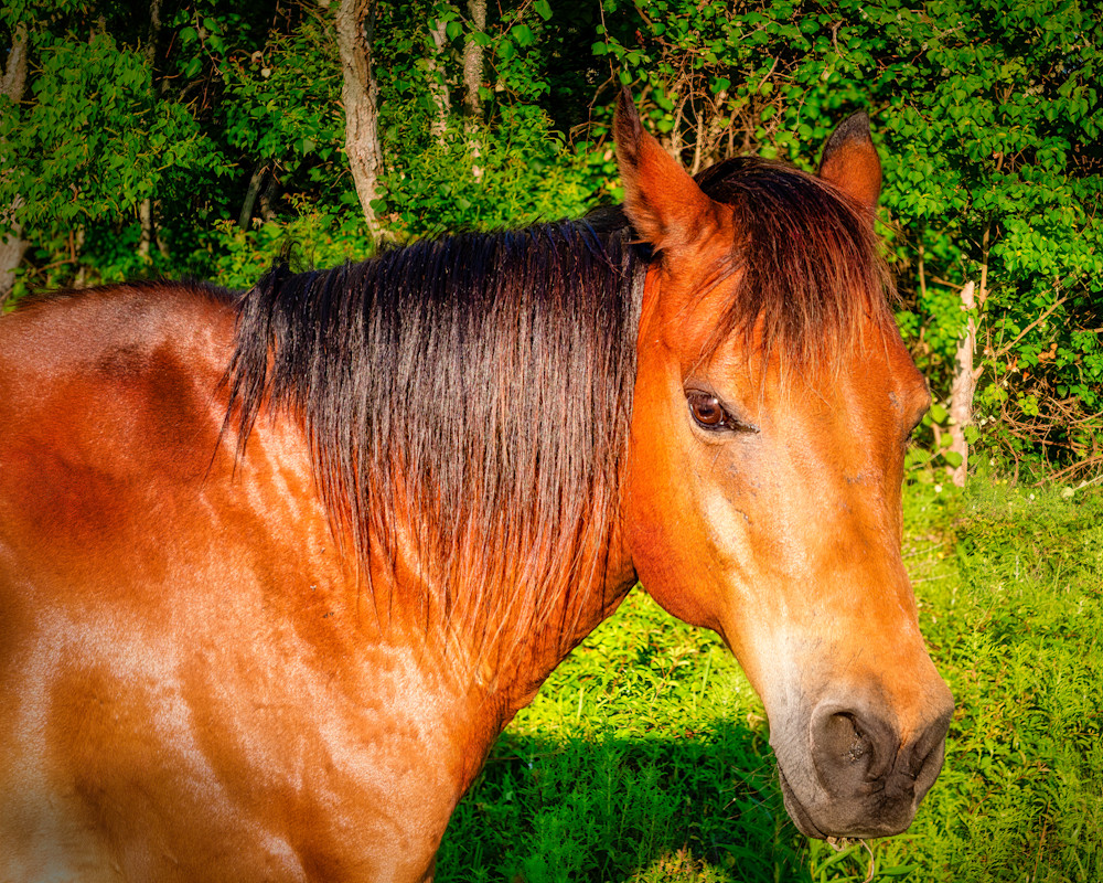 Horse In Pasture 2 Photography Art   Grace Fine Art Photography by Beth Sheridan