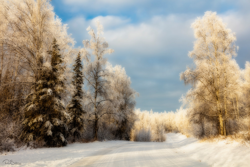 Hoarfrost trees line Alaska road