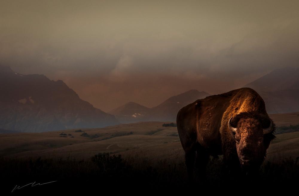 Buffalo Morning Photography Art | Harry John Kerker Photo Artist