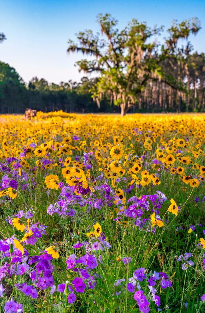 Flower Fields Forever Photography Art   kramkranphoto