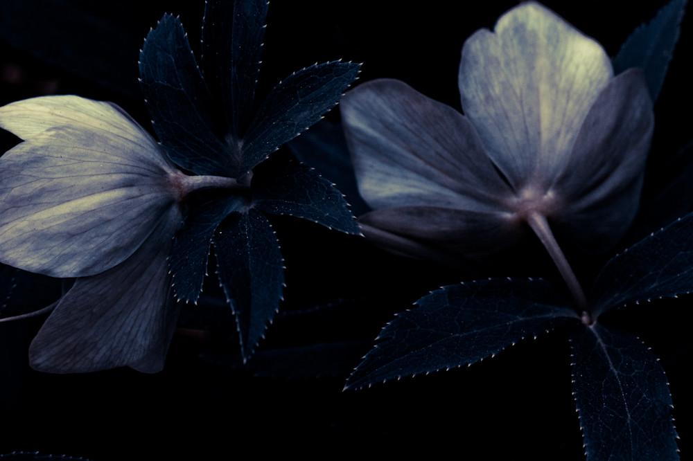 Blue Like Evening No. 1 Art   Anna Jaap Studio