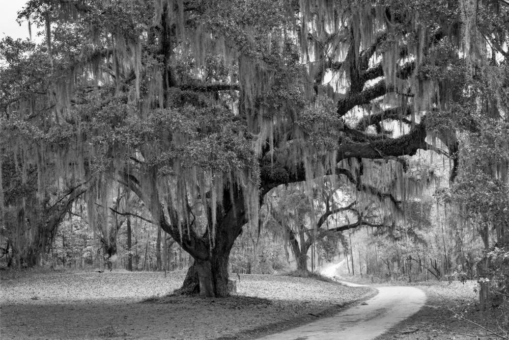 Donnelly Entrance Oak